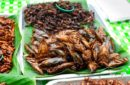 Eating-insects-for-protein