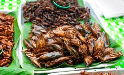 Eating insects for protein