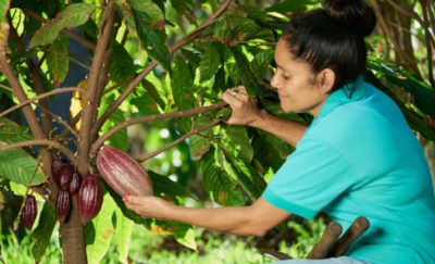 Sustainability practices - cocoa farmer