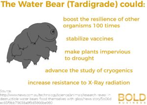 Water Bear - Tardigrade - Protein could help against drought and radiation