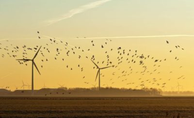 Wind power and environmental cost