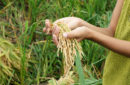 Agro technology for food stability