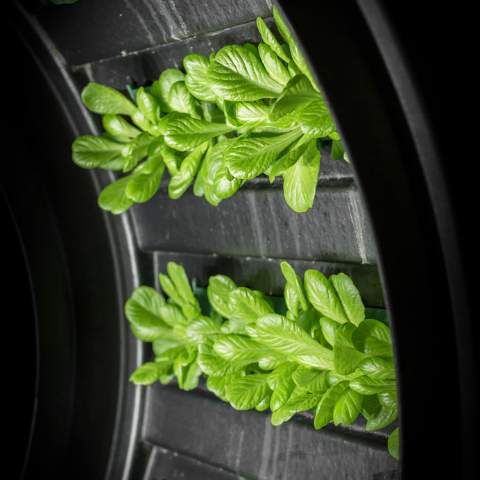 NASA's lunar greenhouse - growing food in space