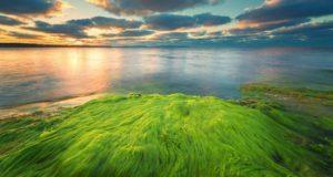 photograph of an algae bloom on the ocean