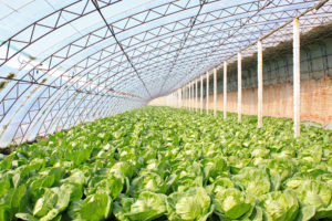 Urban Farms are big business in China