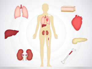 Illustration depicting the most common organs for transplant and human body part regeneration.