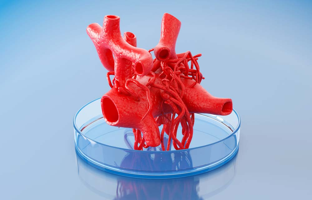 3d bioprinting of tissues and organs