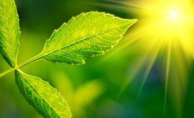 Green Leaf with glowing sun - artificial leaf energy
