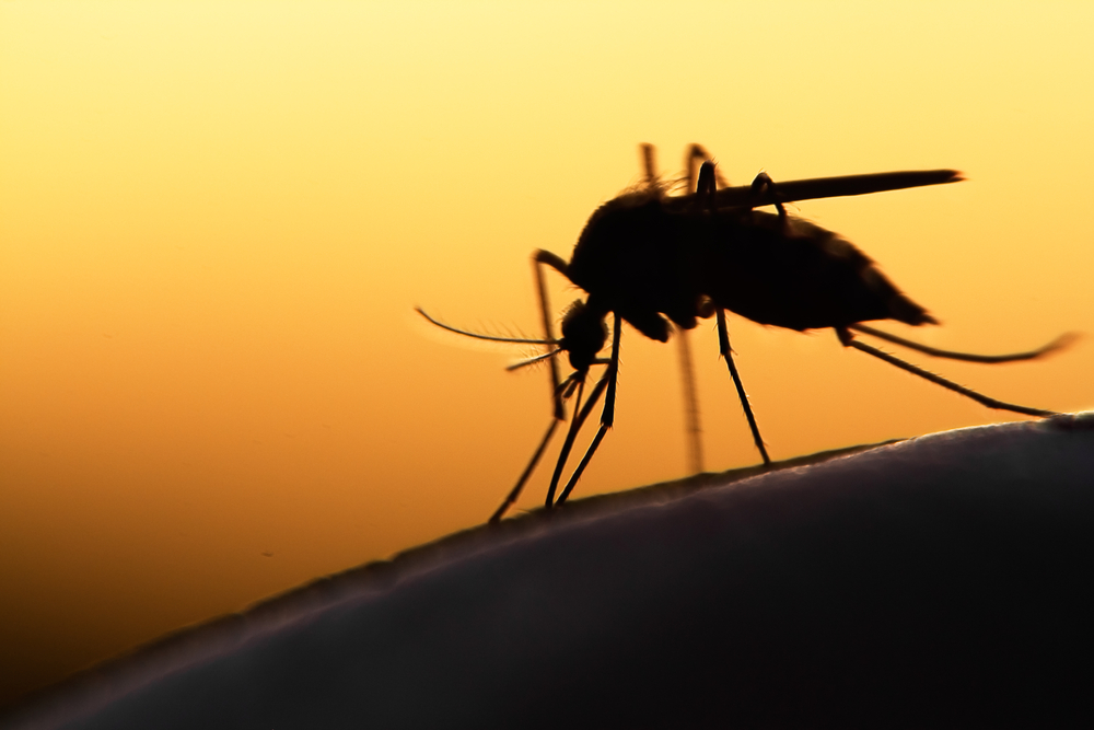 a photo of a magnified mosquito's silhouette amid a sunset background in relation to the topic of anti-mosquito technology