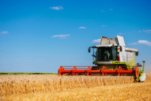 Combine Harvester in a wheat field.