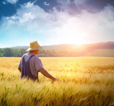 farmer in grain field