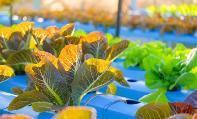 Future Of Food: 20 Startup Companies Innovating Food Production