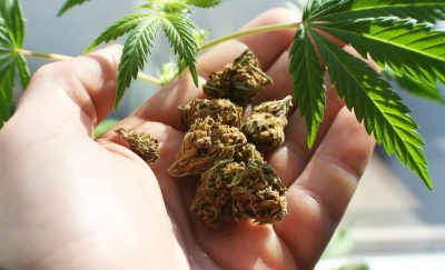 Marijuana Smugglers Illicitly exporting across the states