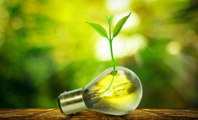 Light bulb and tiny plant metaphor for renewable energy sources