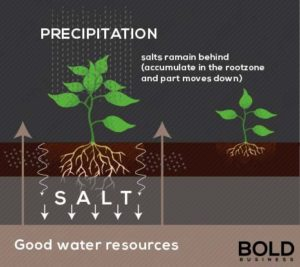A graphic of a plant with rots, and salt granules being filtered away.