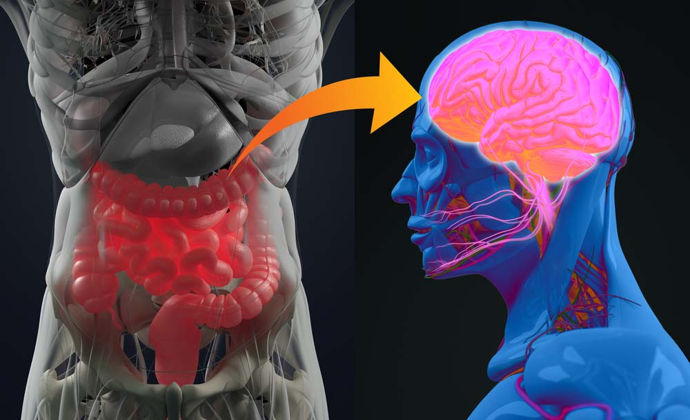 image of gut that is linked to our brain, an ms cure breakthrough