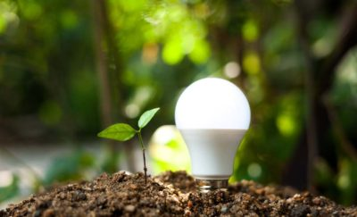 a photo of a sprouting plant and light bulb on a forest floor in relation to the topic of the possibility of achieving 100 percent renewable energy by 2050