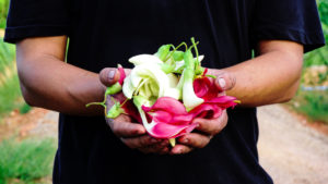 Fruit in a Farmers hand