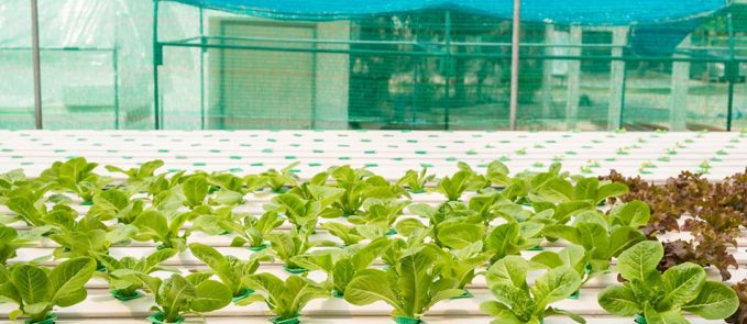 Technology Transforms Food Industry