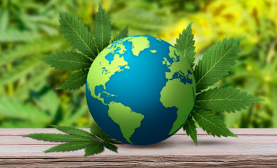 a globe wrapped in marijuana leaves against a cannabis leaf background, symbolizes companies that produce medical marijuana