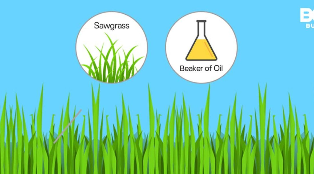 a photo showing an image of sawgrass and an image of a beaker of oil above a lawn clip art in relation to the topic of biodiesel production from non-edible plant oils