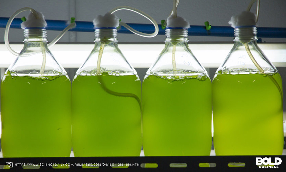 Algae Farming: The Key To Sustainable Life in The Future