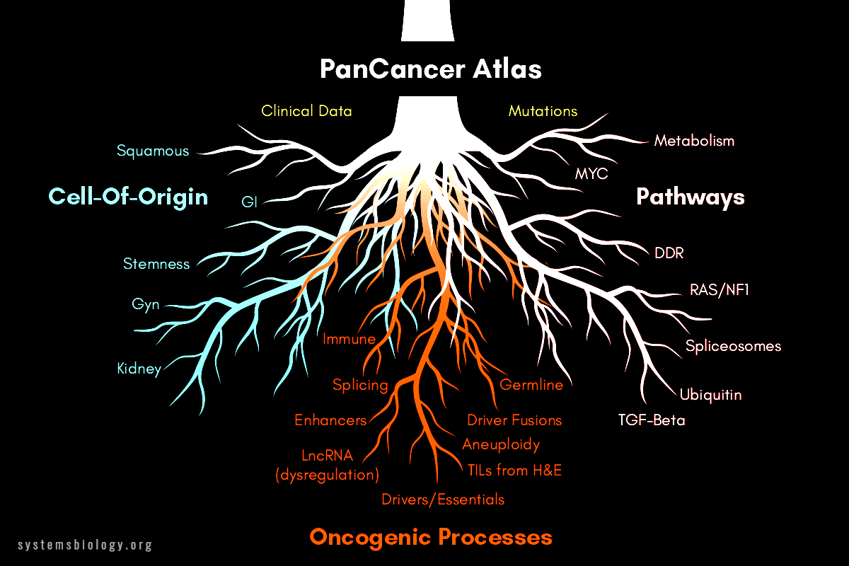 PanCancer Atlas provides understanding of 33 tumor types
