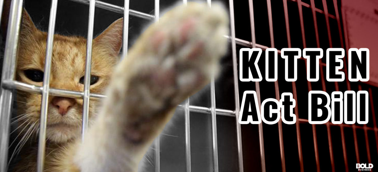 New Legislation to Protect Cats from Any Laboratory Research