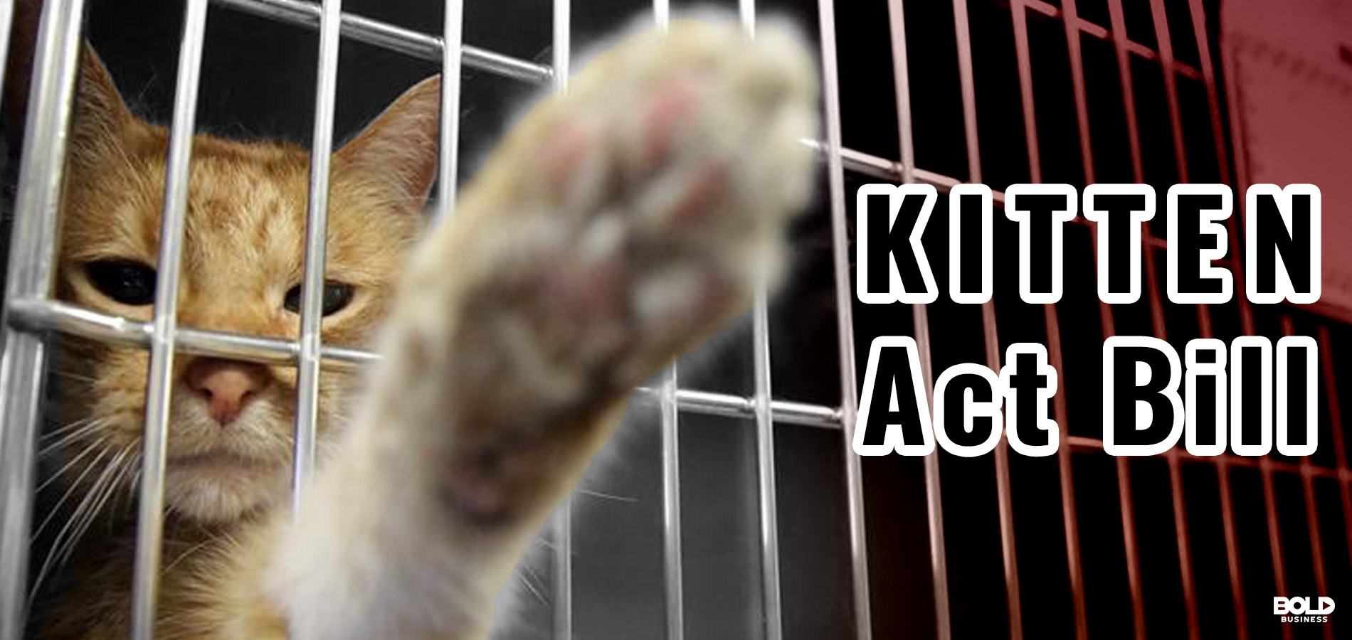 cat reaching out from a cage, kittne act