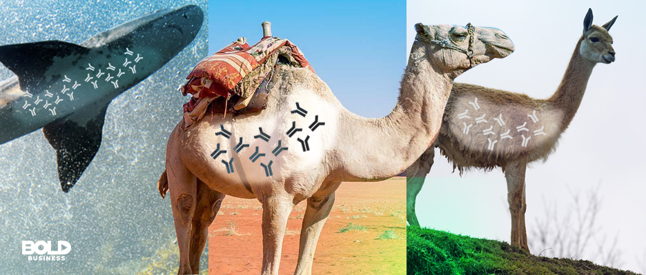Camels and sharks may soon take center stage in medical science