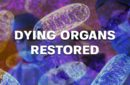 Mitochondrial Transplant: Using Dying Organs to Restore Life