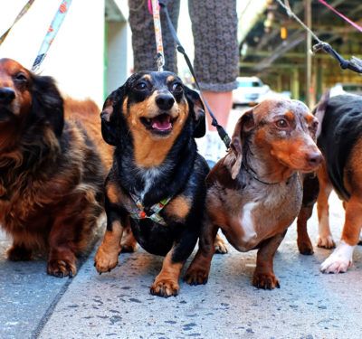 Dog Walking Services Giants Rover and Wag Receive Over $600M to Sit Dogs