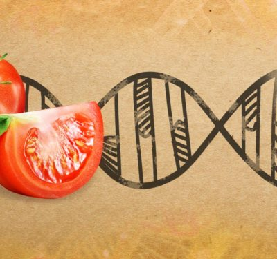 Gene Editing in Agriculture
