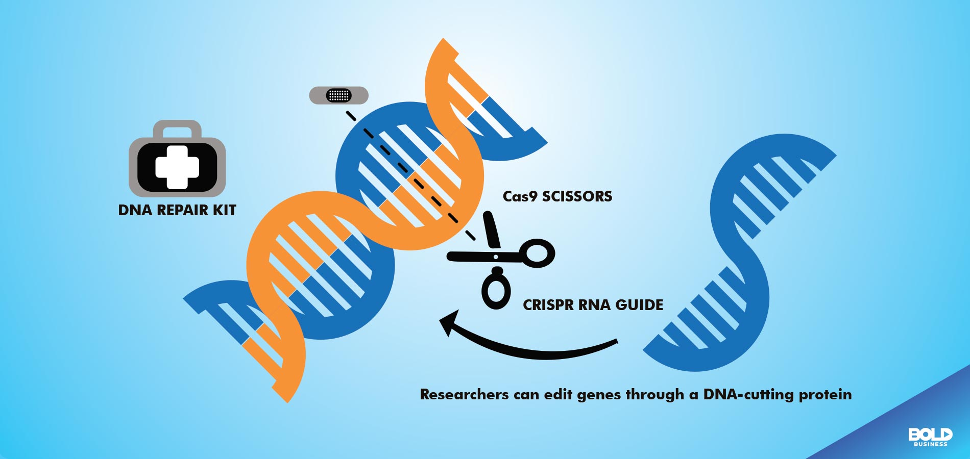 gene editing dna being altered, gene editing in agriculture