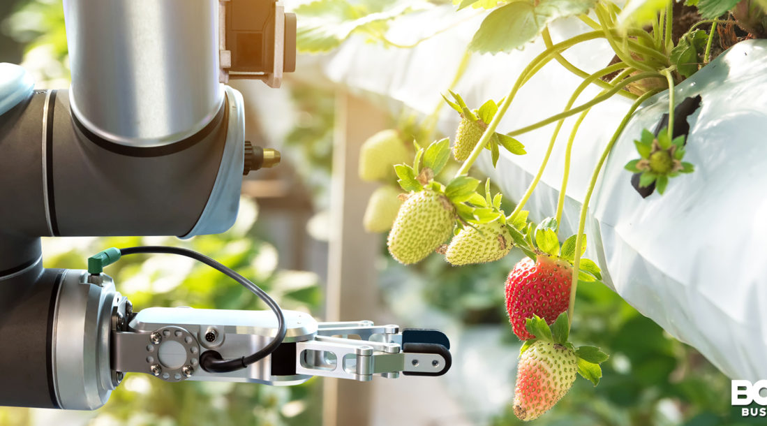 robot about to pick a strawberry