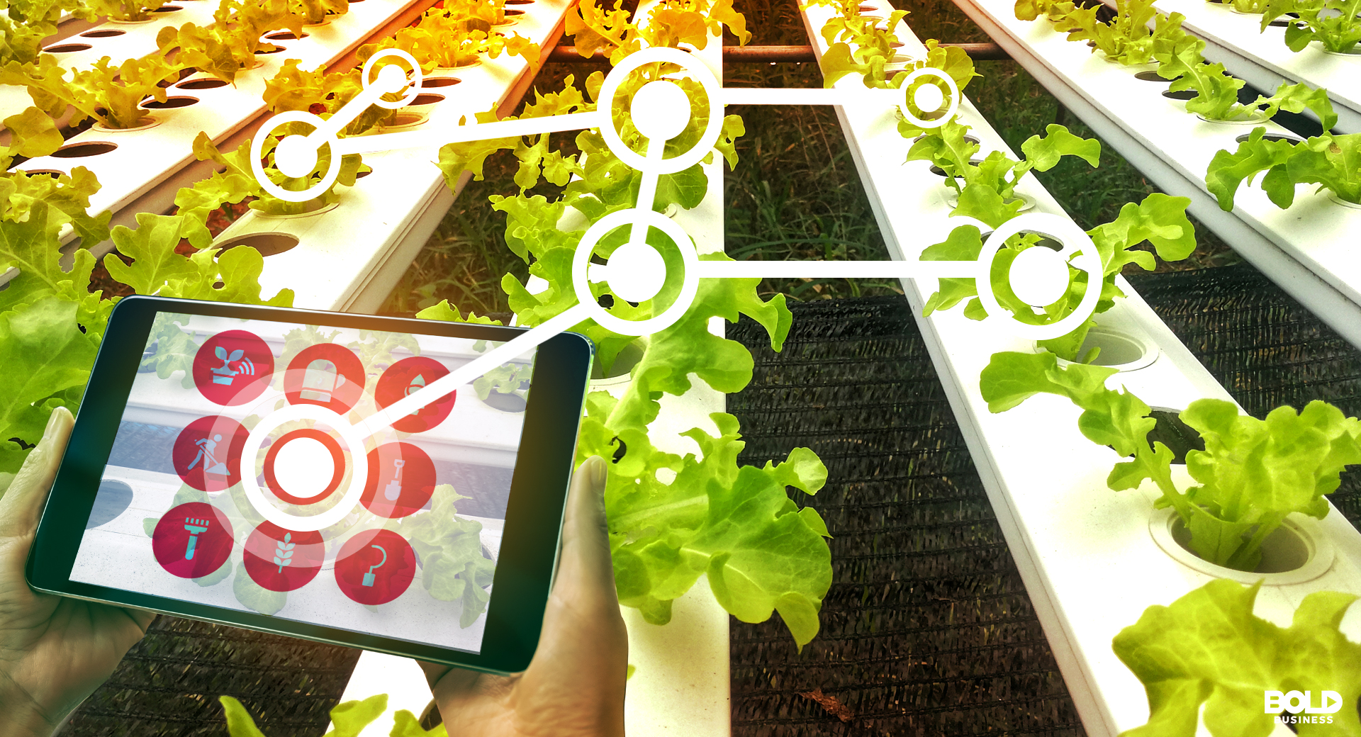 Agriculture Technology using the Internet of Things device being used to pick crops