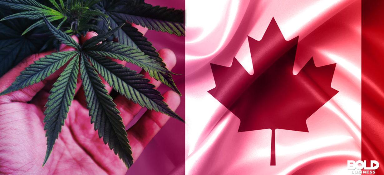 Is Marijuana Legal in Canada