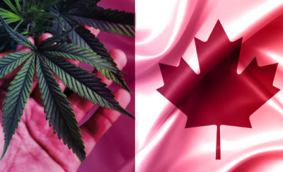 marijuana on the left and maple leaf on the right