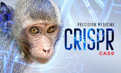 monkey and precision medicine on the right