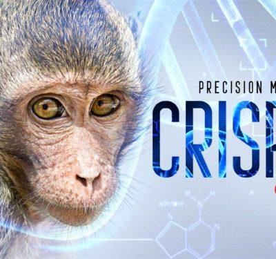 Precision Medicine Monkeys are Paving the Way for CRISPR