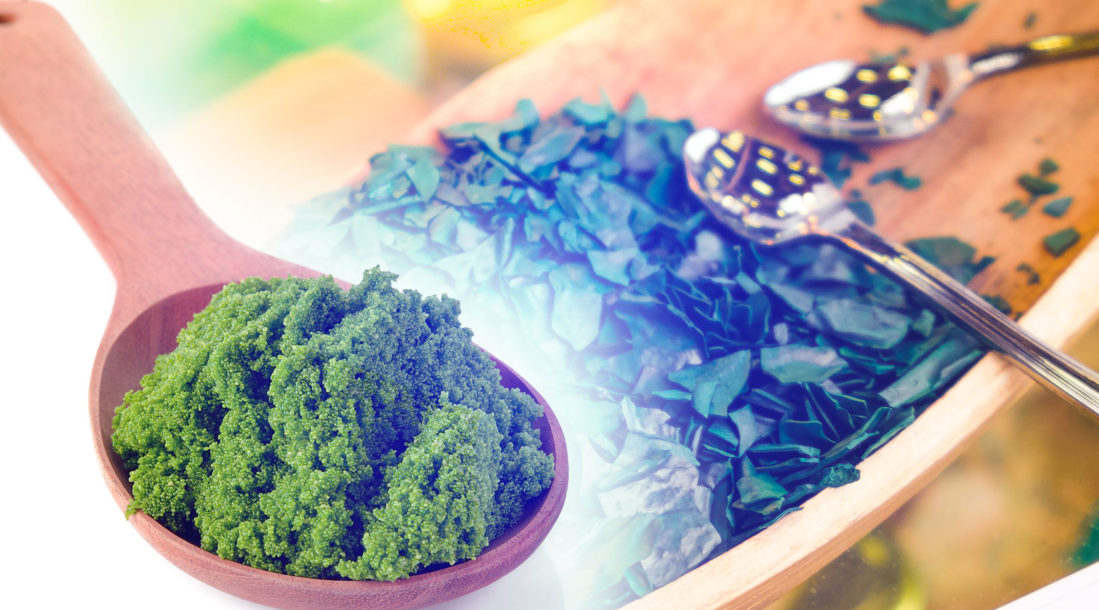 Algae-May-be-the-Food-of-the-Future_Feature-Image