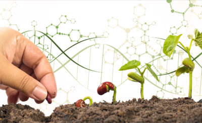 CRISPR technology in agriculture, hand planting seeds with dna sequence on the background