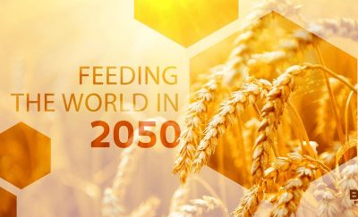 feeding the world in 2050 - wheat stalks