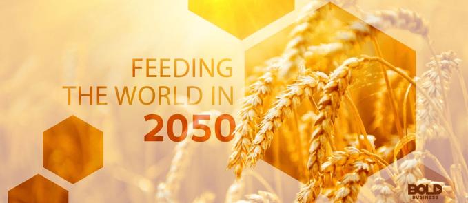 feeding the world in 2050 - wheat stalks