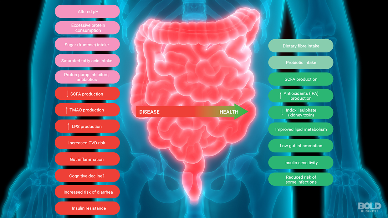 The importance of gut health can be seen in how microbiota directly affects a person's well-being.