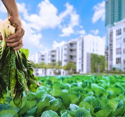 Maximizing food production is where the importance of urban farming lies.