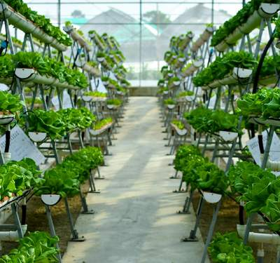 Vertical farming systems maximize space and resources.