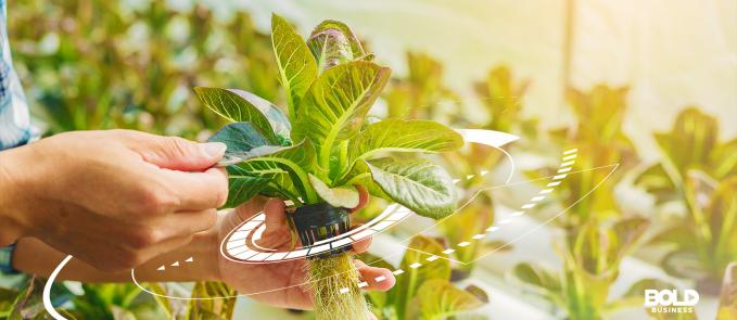 hydroponic methods, a hand holding a green leafy plant