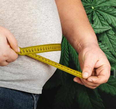 a man using a measuring tape to measure his waist line amid the discussion on marijuana and obesity