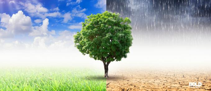 A tree that is half happy, half sad, climate change solutions on demand